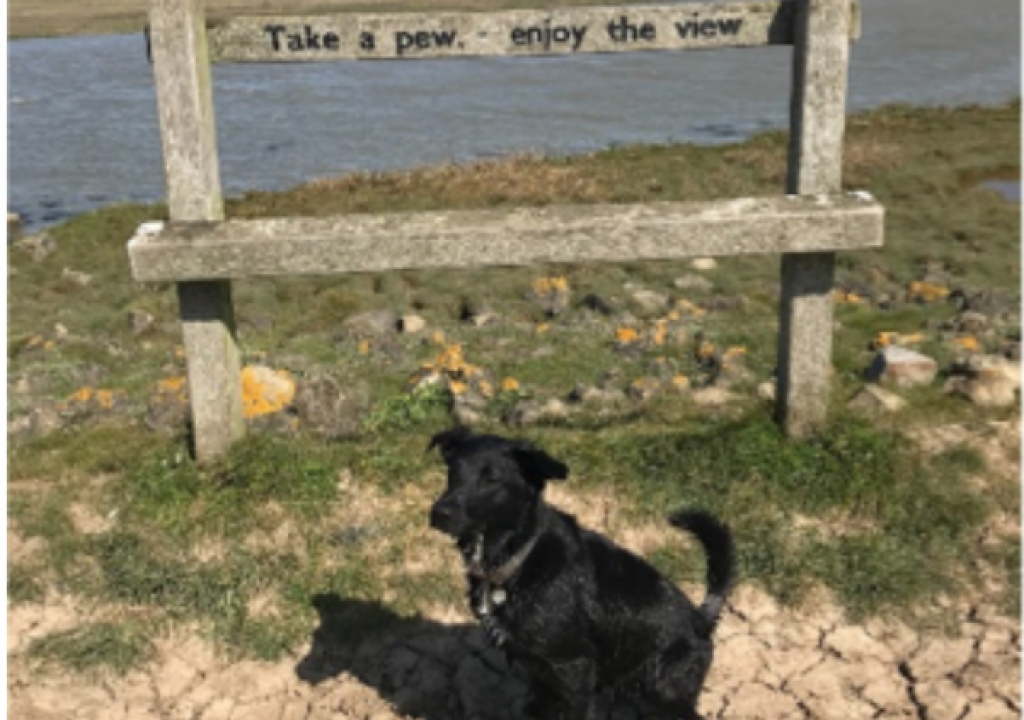 Top Dog Walks in Faversham